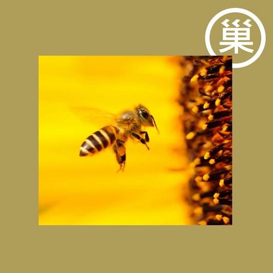 蜂王乳自古以來就在傳統醫學中使用,目前被用於製藥和化妝品領域,並作為非處方功能性食品銷售