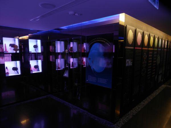 整個七彩神仙魚的展示空間設計的很有質感彷佛走入某個展覽館般的精緻,讓七彩神仙魚也有個很棒的展示天地