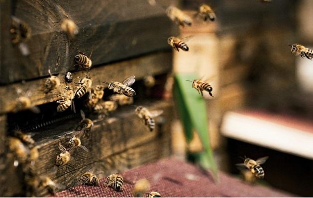 天然蜂蜜,龍眼花蜜,龍眼蜜,荔枝蜜,荔枝花蜜,純正蜂蜜,推薦好蜜,蜂王乳