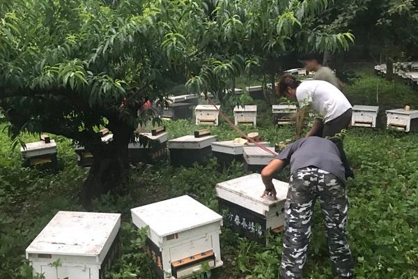 蜂蜜,花粉,蜂王乳,伴手禮,點心,甜點,餅乾,飲料